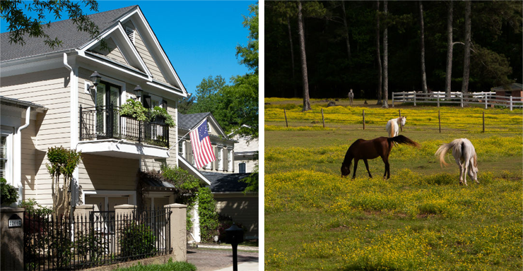Picture of historic Fayetteville house and horses grazing